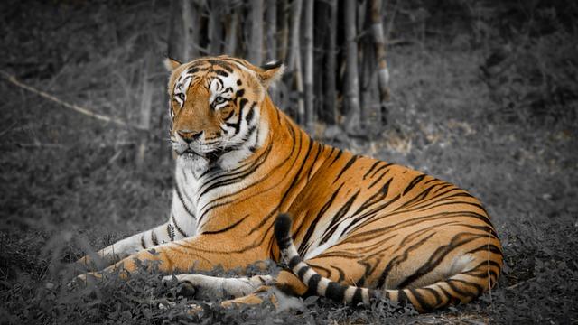 Sunderban Royal Bengal Tiger Tour India
